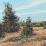 EASTERN RED CEDARS II 5 x 7   oil/canvas
